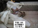 20051111_kinaco5