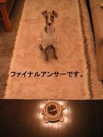 20051117_kinaco0
